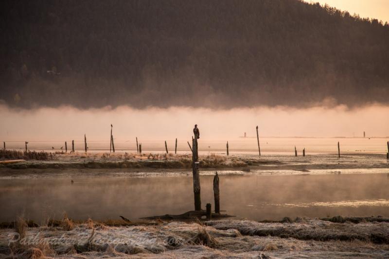 Cowichan Bay Sunrise-2