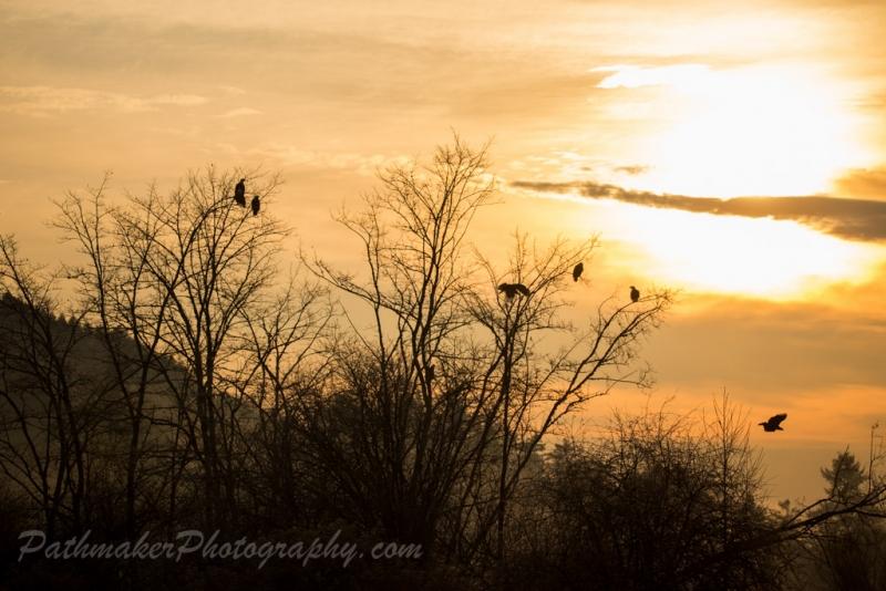 Cowichan Bay Sunrise-9