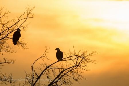 Cowichan Bay Sunrise-10