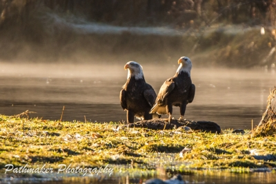 Goldstream Park Eagles 2017 (10)
