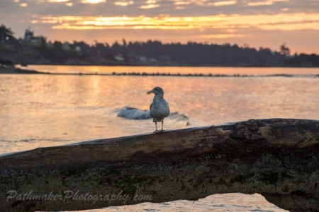 Esquimalt Lagoon Sunrise (13 of 26)