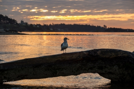 Esquimalt Lagoon Sunrise (14 of 26)