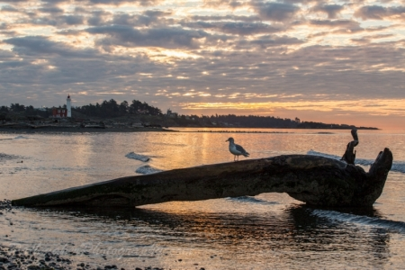 Esquimalt Lagoon Sunrise (15 of 26)