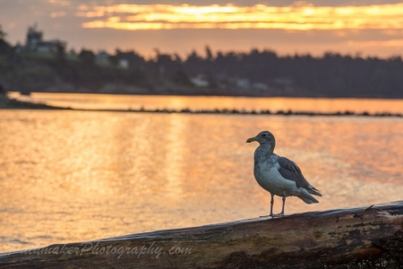 Esquimalt Lagoon Sunrise (16 of 26)